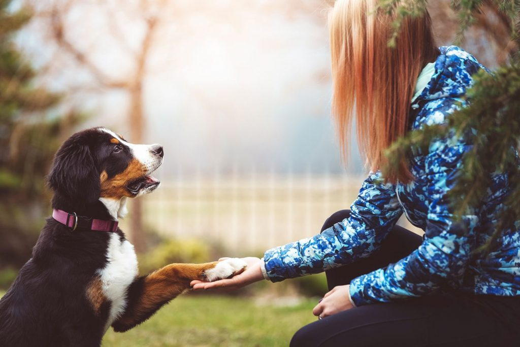 Keep Your Dog Fit And Healthy